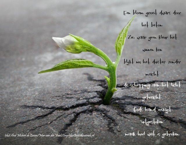 Een bloem groeit dwars....